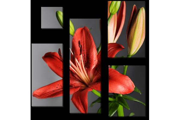 Красный цветок лилии