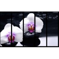 Белые орхидеи на камнях