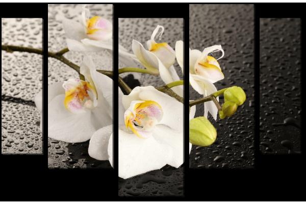 Веточка белой орхидеи