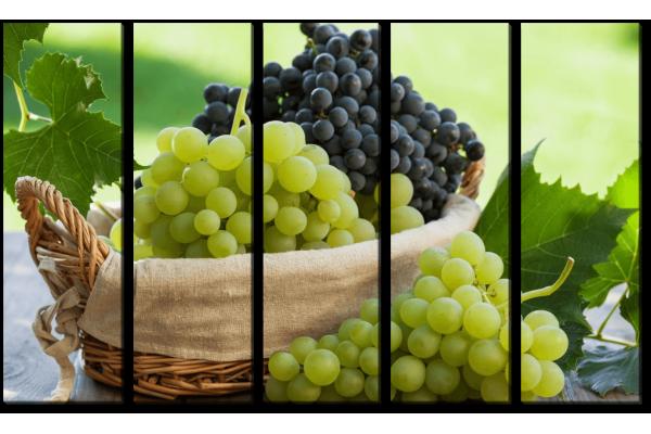Утренний сбор винограда