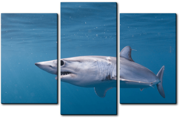 Акула Мако