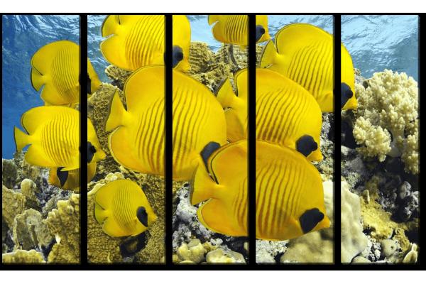 Желтые рыбки