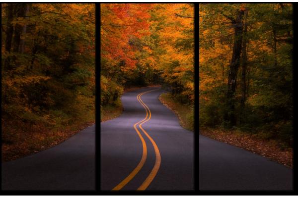Дорога в лес