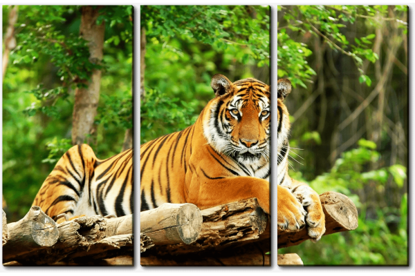 Тигр на бревнах