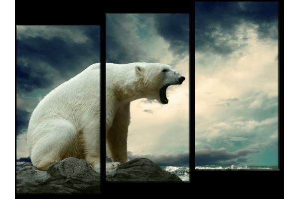 Белый медведь на берегу