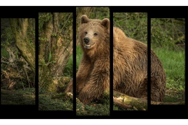 Медвежья улыбка