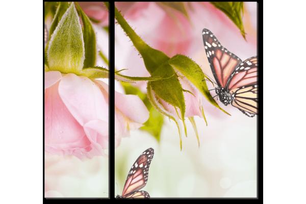 Бабочки у розы