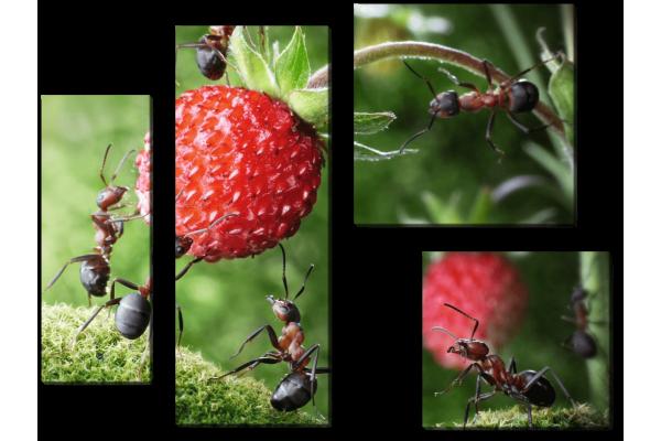 Команда муравьев
