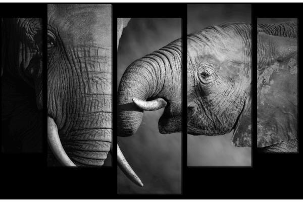 Любовь слоненка