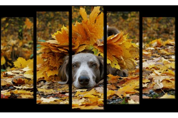 Веймаранер в листьях