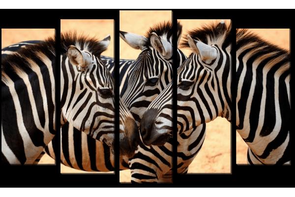 Прикосновение зебр