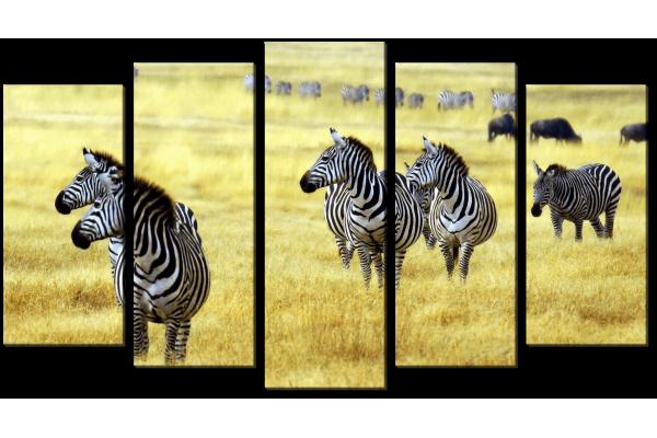 Зебры на пастбище
