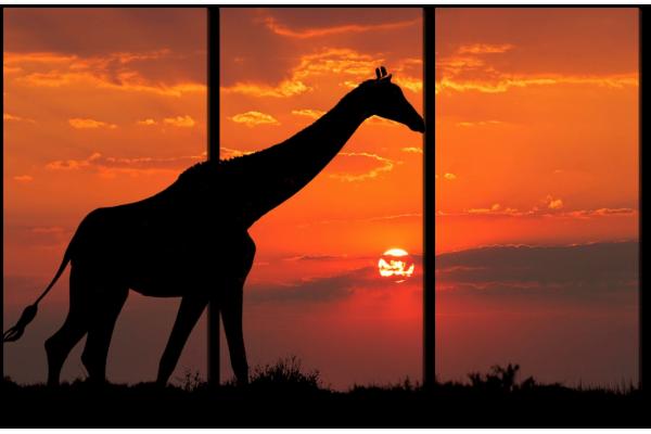 Жираф на закате